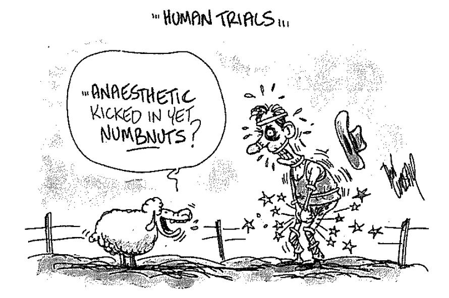 numnuts cartoon